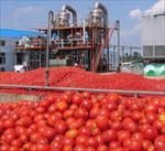 پروژه-فرآیند-تولید-كنسرو-و-رب-گوجه-فرنگی
